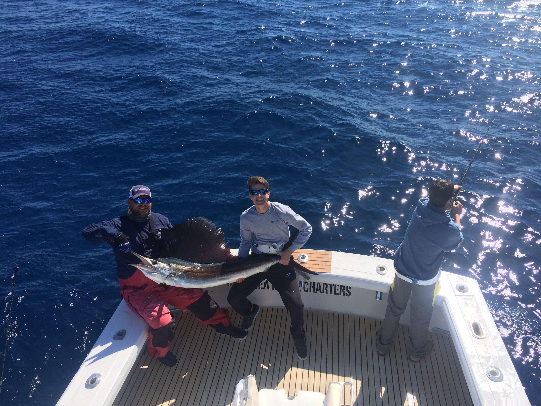 Sailfish on the sea horse florida keys fishing for Florida keys fishing charters