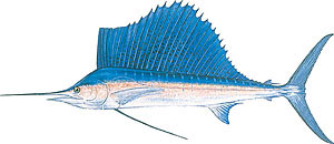Sport fishing for sailfish.
